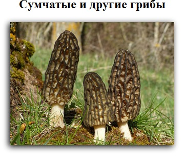 Сумчатые и другие грибы
